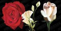 bunga realistis render bahan vektor