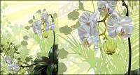 Material de ilustración vectorial orquídeas