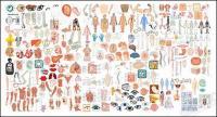 La estructura de órganos humanos partes del vector