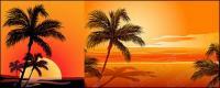 ココナッツ ベクトルに影響を与える、海辺の日没素材