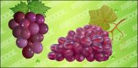 racimo de uvas vector material