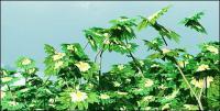 Azul cielo y planta de imagen material