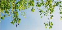 青い空の写真素材の下の緑の植物