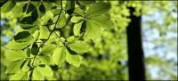 Vitalidad verde deja material de imagen