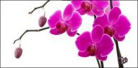 Orchidee weiß Bild Material-9