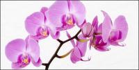 Orquídea branca imagem material-3.