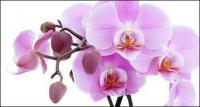 Orquídeas blancas imagen material-2