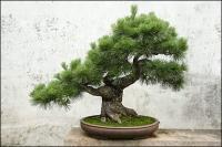 鉢植えの画像素材-1