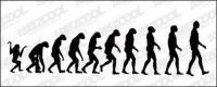 Le cours du matériel de vecteur de l'évolution humaine