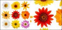 Material de imagen colorida daisy