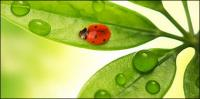 Flutuante plantas e insetos picture material-8