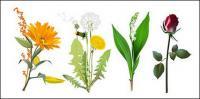 4 種類の花のベクター素材