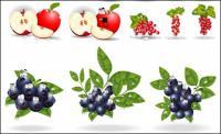 Vector de material con los ojos de fruta