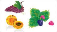 เวกเตอร์วัสดุหลายทั่วผลไม้