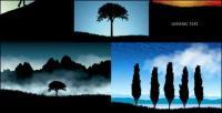 美しい風景のシルエットのベクター素材