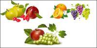 フルーツのベクター素材