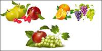 Material de vetor de frutas