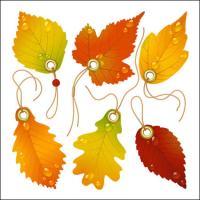 Maple requintado folha marcadores vector de material