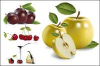 4 진짜 과일 벡터