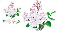 Fitoterapia chinesa - vetor original lilás