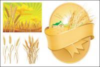 Вектор пшеницы тема материала