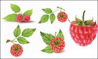 Красные ягоды векторный материал
