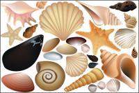 Vektor farbige Shell