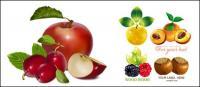 과일 소재의 벡터 설정