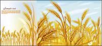Matériau de vecteur de blé