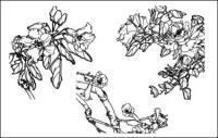 カワラナデシコ、コスタス、西の家ベゴニア Aegiceras、ダイコンの花