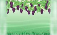 Vecteur de la vigne