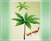 Planta vector