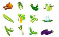 Gemüse Vektor - Kohl, Süßkartoffel, Auberginen und Bohnen Rettich