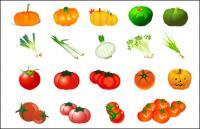 Vector vegetal - tomate calabaza ajo cebolla