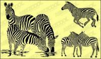 Zebra vecteur matériel
