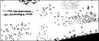 Medios vaya producen material de vectores - aves en imágenes