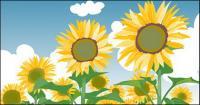 ท้องฟ้าสีฟ้า sunflower ฤดูร้อนและเมฆสีขาว