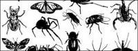 ไปสื่อวัสดุผลิตเวกเตอร์ - แมลง