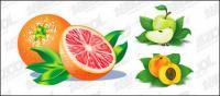 Naranjas, manzanas, melocotón vector de material