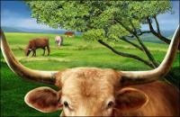 牛、高精細の平野の psd を層状
