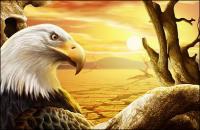 l'aigle sous Sunset