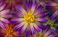 ชุดรูปแบบที่คมชัดเป็นพิเศษซูเปอร์ดอกไม้-6