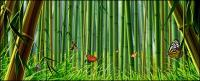 Bambú y mariposa