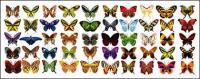 Mariposa exquisito material de vectores