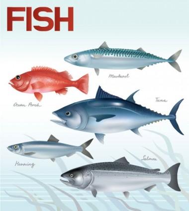 вектор рыбы