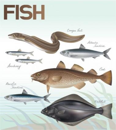 vector de peces