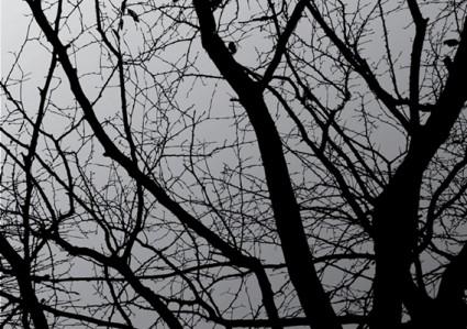 árbol oscuro