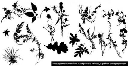 vector de siluetas de planta