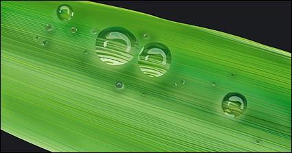agua en el hojas vector material