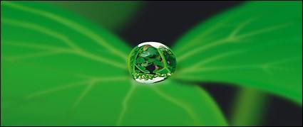 вода на листьях вектор материал